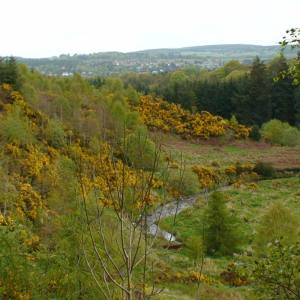 The Crynoch Burn valley in Kirkton of Maryculter Wood