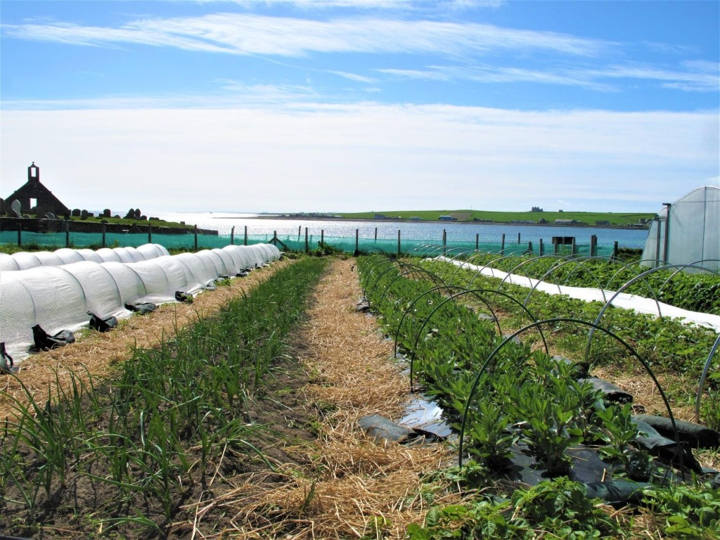 Locally grown produce growing in a field with polytunnels
